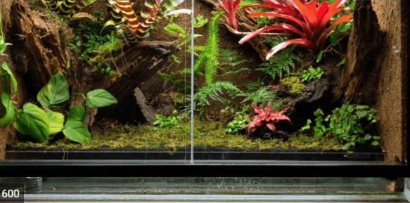 difference between terrarium and vivarium